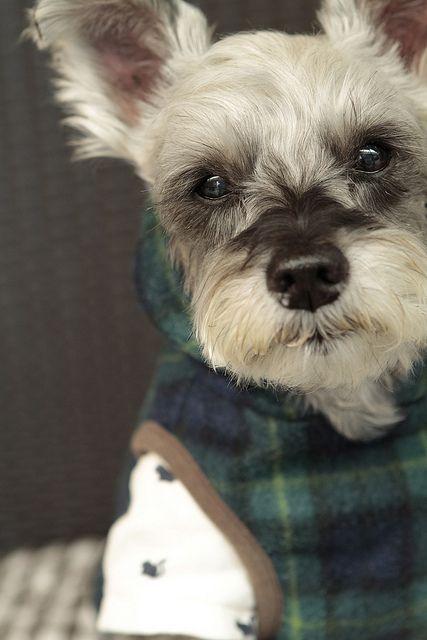 Peluqueria canina a domicilio $35.000