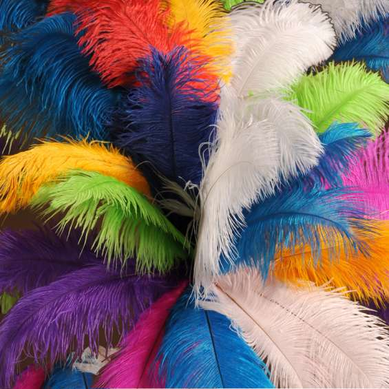 Plumas de avestruz blancas grandes de alta calidad