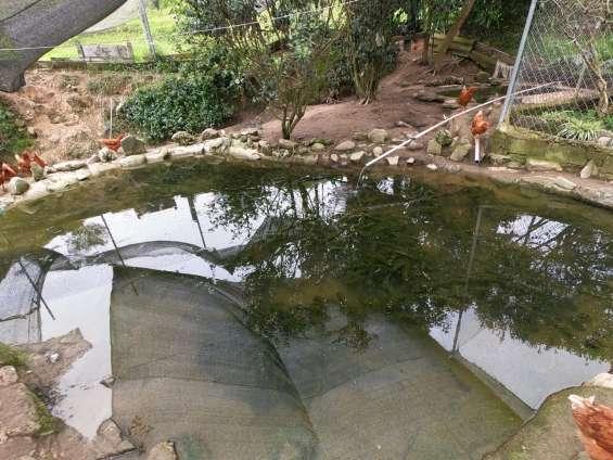 Fotos de Estanques para peces